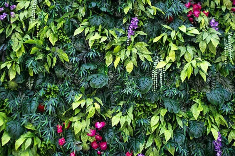 jardin vertical precios